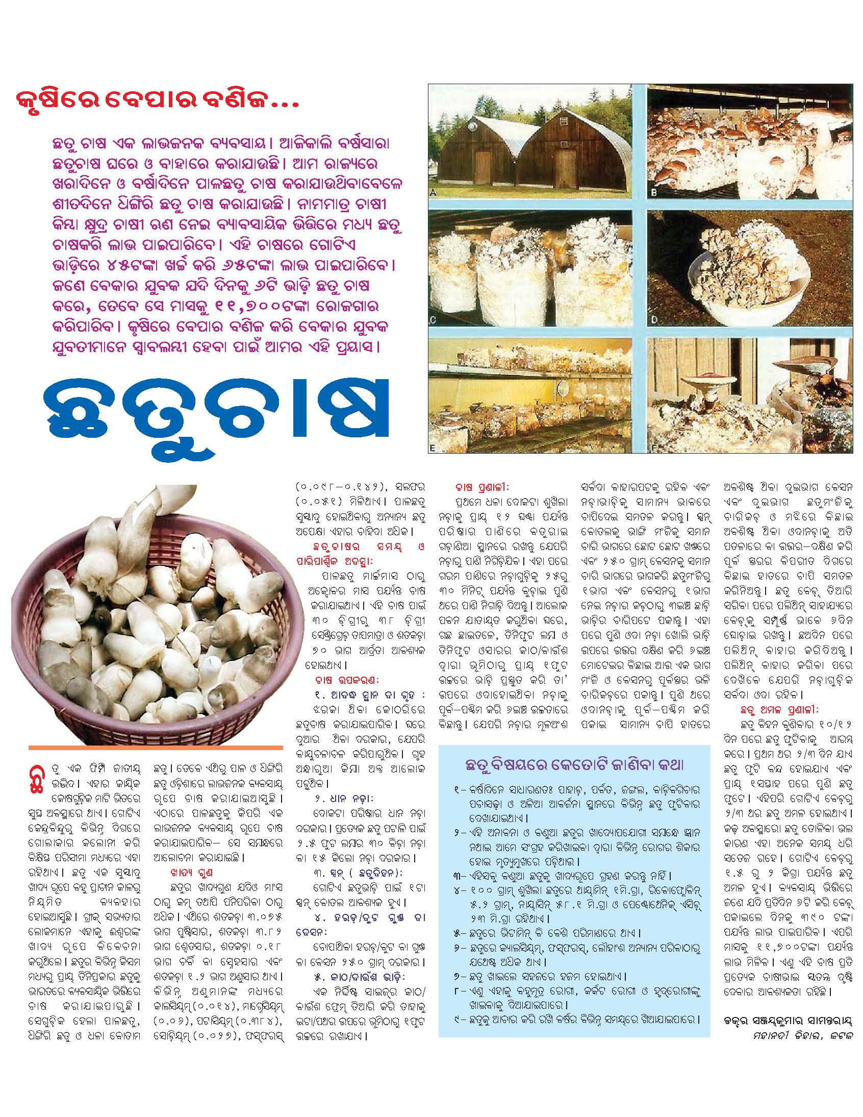 ______ » Blog Archive » Profitable mushroom farming: an article from