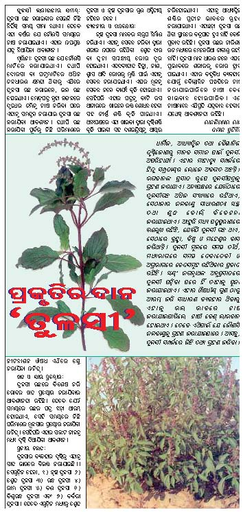 medicinal plants agriculture farming medicinal plants chitta comments off on tulasi plant is nature s gift samaja